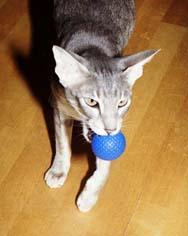 Флорис с мячиком